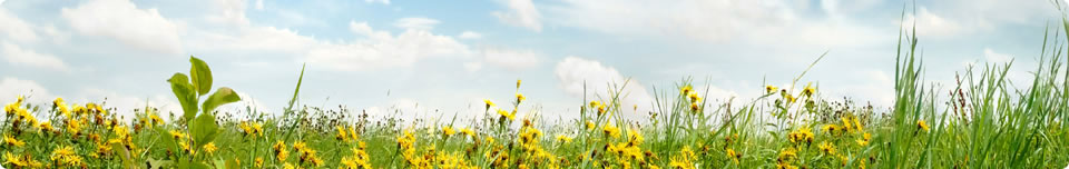 Orite banner - Flowers